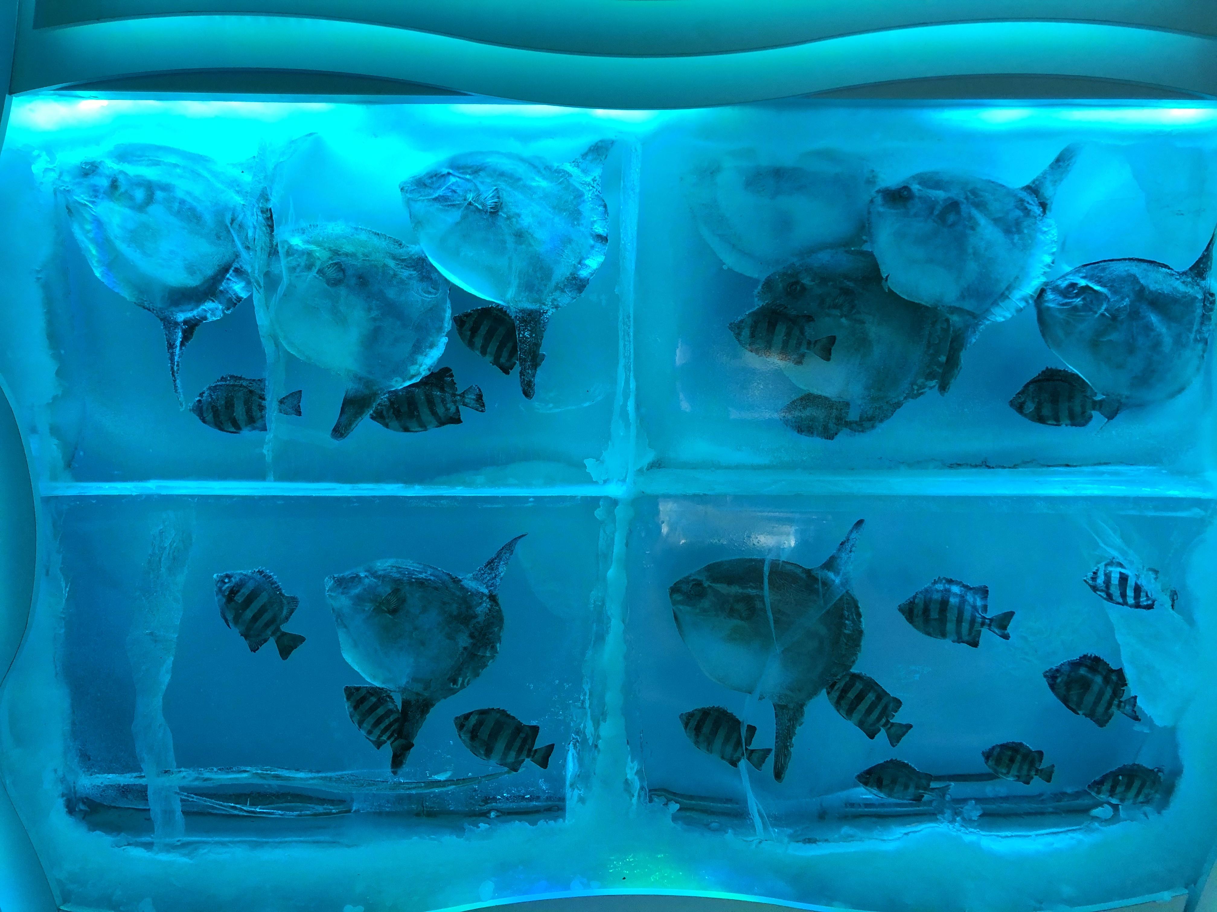 【S-style5月号掲載】気仙沼市『氷の水族館』に行ってきました!